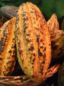 Cacao białe kakao